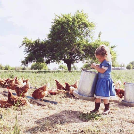 Visit a Farm Feeding Chickens