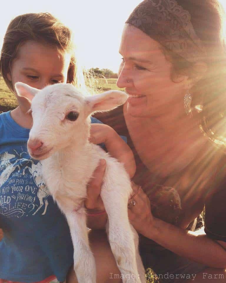 Visit a Farm Lamb