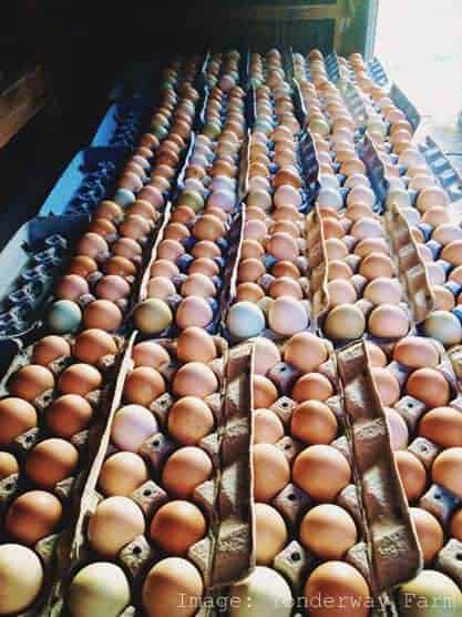 Visit a Farm Pastured Eggs