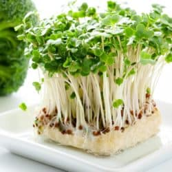 Close up image of block of broccoli sprouts on white background
